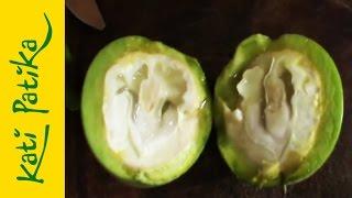 Kati-patika - A zöld dió csodája