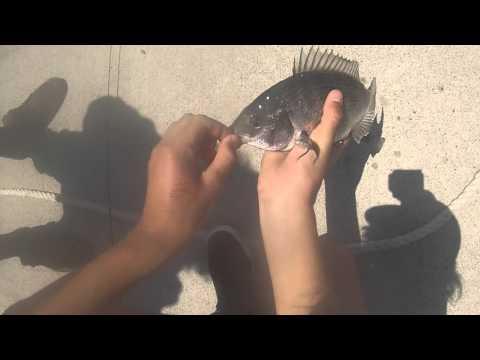 Docklands Fishing - Bream