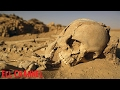 5 ადგილი დედამიწაზე სადაც მომენტალური სიკვდილი გველის