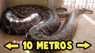 TOP: Las 5 Serpientes Más GRANDES Del Mundo