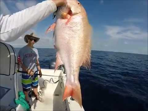 Half Day Reef Fishing for Mutton Snapper and Yellowtail Snapper
