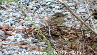 Watch Wrens Dust video