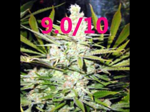 Best Top 10 Marijuana Strains
