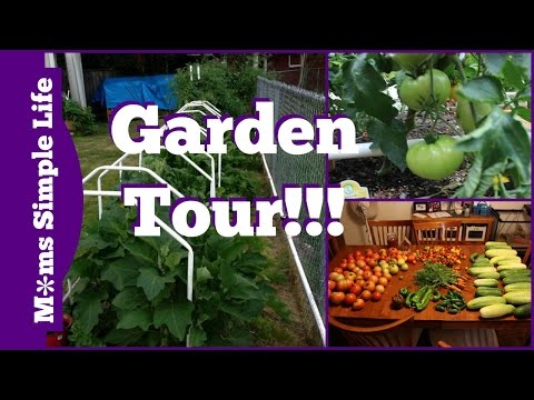 Mittleider and non Mittleider Garden Tour: What worked and what didn't work