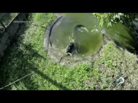 Monstros do Rio Temp 06 apocalipse no Rio Amazonas