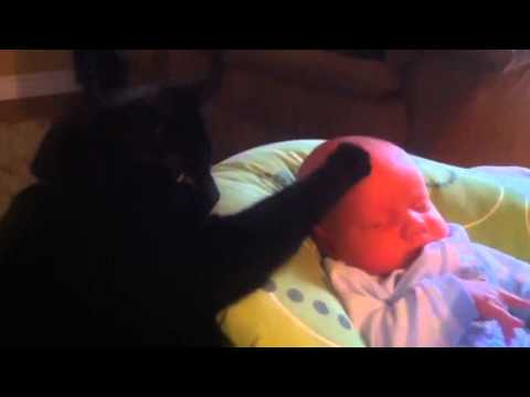 Cat soothing crying baby to sleep too cute youtube original