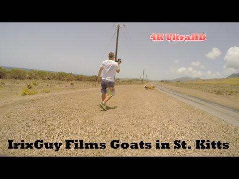 GoPro HERO4 4K - Goats in St. Kitts