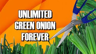 HOW TO REGROW GREEN ONIONS FROM CUTTING #2 (FOLLOW UP VIDEO)