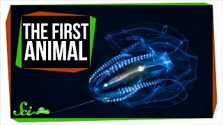 What Did the First Animal Look Like?