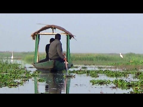 Boating & Birding at Mangalajodi Wetlands HD - North Chilika, Odisha