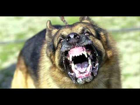 أقوى خمسة كلاب بالعالم Music Videos