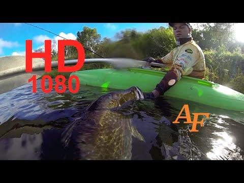 Barra Big Fish Caught in Kayak Fishing Monster Fish Barramundi Andysfishing EP 105