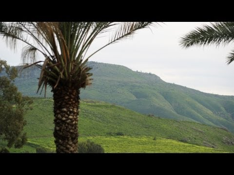 Royalty Free Stock Video Footage of a palm tree and green hills shot in Israel at 4k with Red.