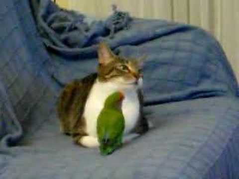 Parrot and Cat Friends