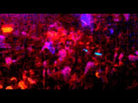 Restan Krzeczowice [13.11.2011] - Plastikowa Biedronko! Music Videos