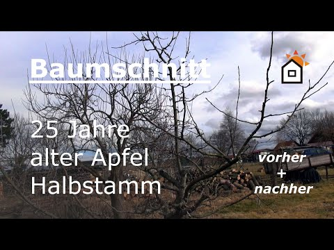 Obstbaumschnitt Vorher Nachher Apfelbaum Halbstamm 25 Jahre