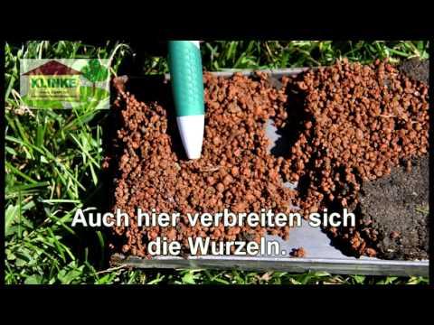 Bodenverbesserung Für Bäume Und Rasen