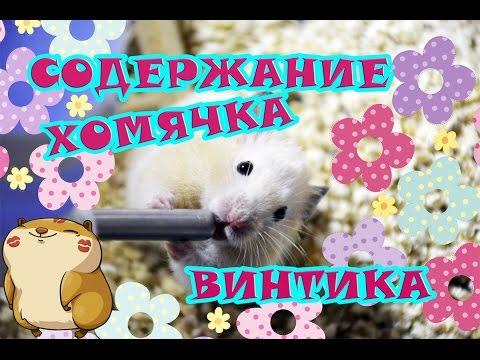 Содержание хомячка Винтика ♥