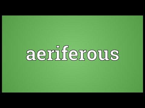 Header of aeriferous