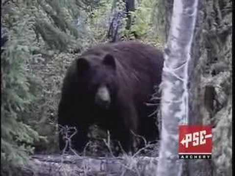 HUGE Canada Black bear hunt