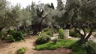 Garden of Gethsemane and Church of All Nations