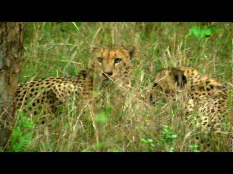 Wild Animals of Africa-San Wild Sanctuary