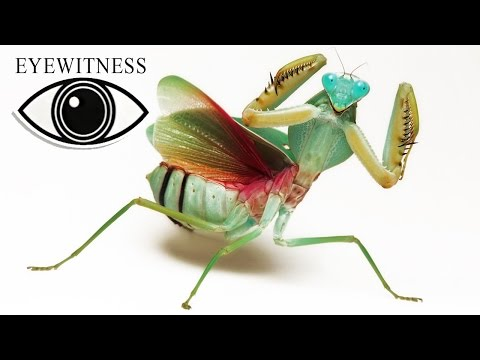EYEWITNESS | Insect | S1E9