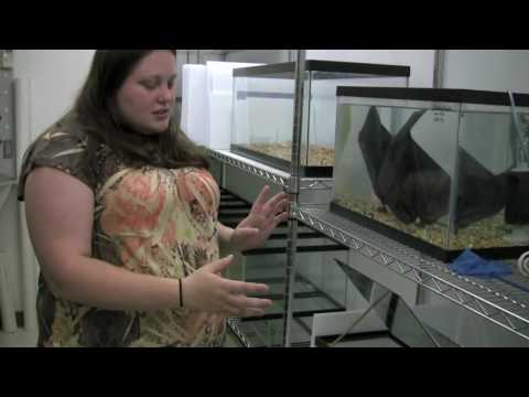 SSRP 2010: Observing Fish Behavioral Consistence and Repeatability