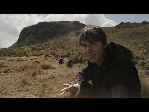 Brian Cox uncovers the gelada baboons - Human Universe: Episode 1 Preview - BBC Two