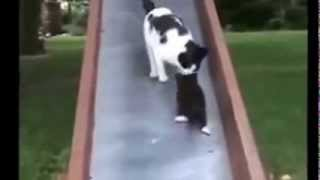 Супер котята!!! cool and funny cats