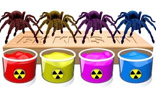 Bathing Fun Colors for Kids   Colors Shower with Spider Colors   Dye Coloring