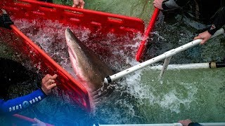 How Do You Move a Shark? It