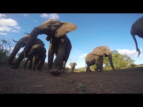 象の通り道にカメラを置いてみると・・・!?