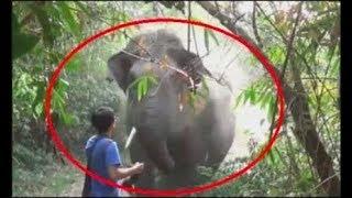 When Wild Animals Charge