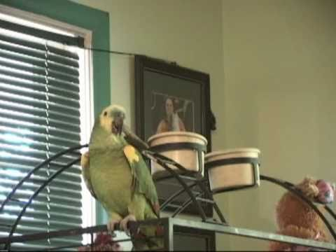 CharlieO The Praying Parrot - Now I Lay Me Down To Sleep