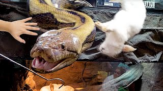 INSANE!! ALMOST BITTEN BY A HUGE SNAKE!! SUPER CLOSE CALL!! | BRIAN BARCZYK
