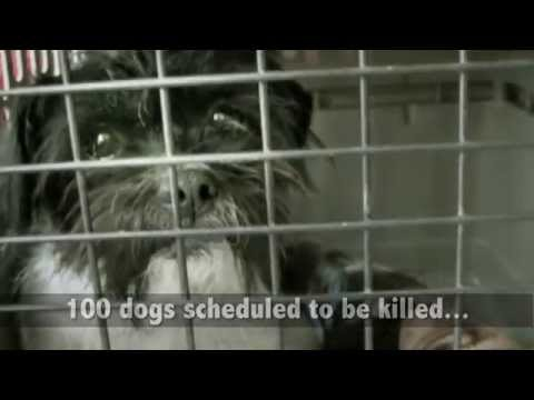 Shelter Transport Animal Rescue Team S T A R T