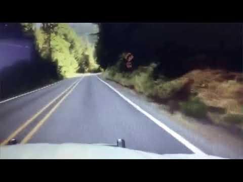 Cougar darts in front of Clackamas deputy's car