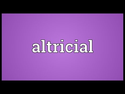 Header of altricial