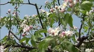 津幡の四季 ~春~
