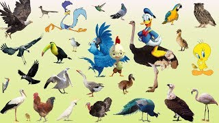 Birds Name for Kids Birds Names and Sounds Pres School Children Learning Videos