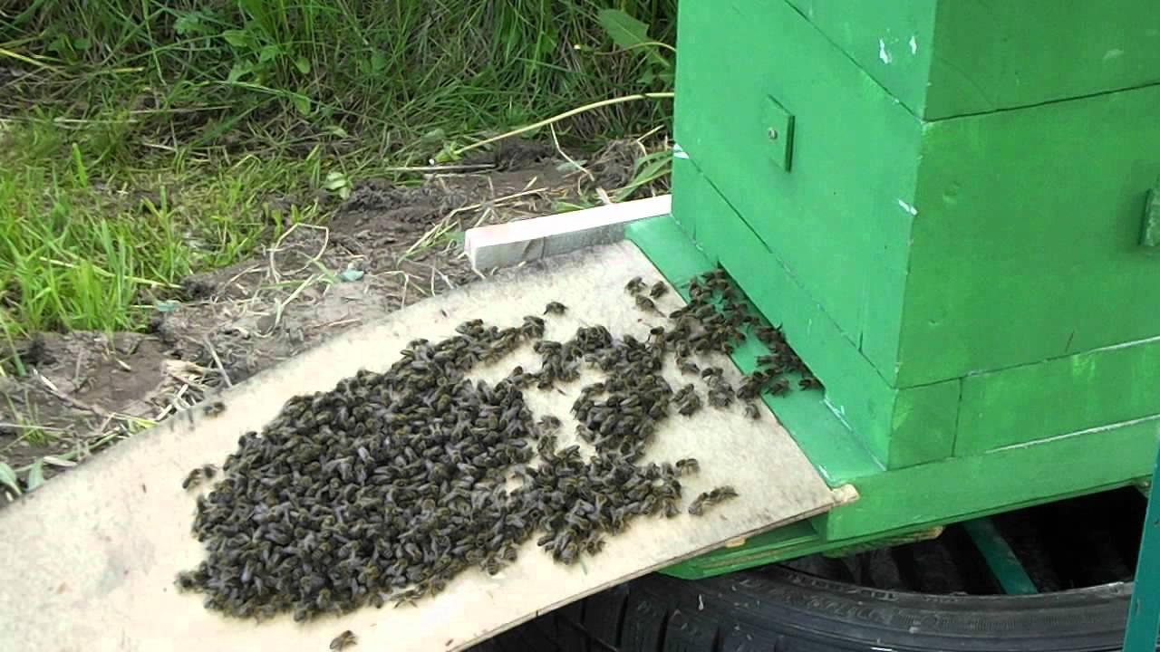 Как сажать пчел в новый улей 30