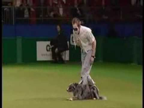 Richard Curtis, Thriller HTM routine, Crufts 2009