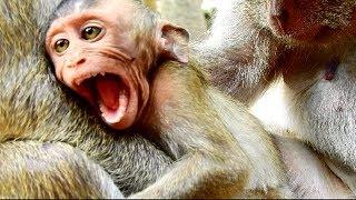Convulsive Around !!! Poor Maddix angry cos mum push away, Baby calling mum cos hungry so much