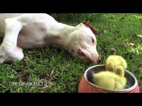 犬と鳥の雛の仲良しな珍風景
