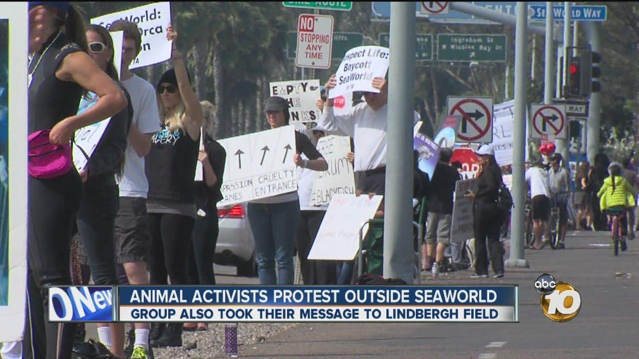 Seaworld San Diego Animals Seaworld San Diego Group