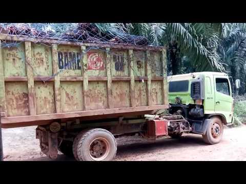 Jumping truk HINO muatan buah sawit