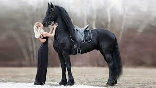 Top 10 Rare and  Beautiful Horses Are Like Nothing You've EVER Seen! | Top 10