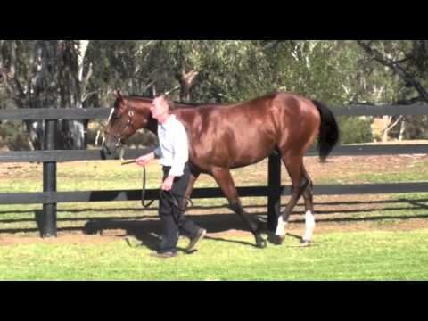 Eliza Park Yearlings 2013 Lot 596 Purrealist x Samana