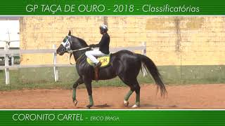 Apresentação animais GP TAÇA DE OURO 2018
